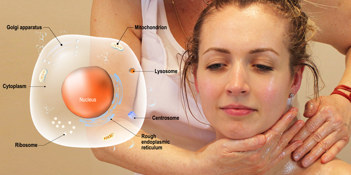 Rejuvenation of cells through Ayurveda Panchakarma