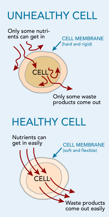 healthy and unhealthy cells