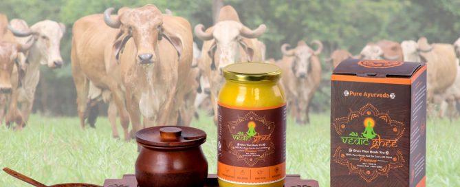 Vedic Ghee and a herd of Gir cows